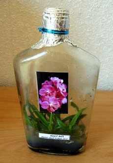 Орхидеи в вазе и колбе, уход и выращивания 75