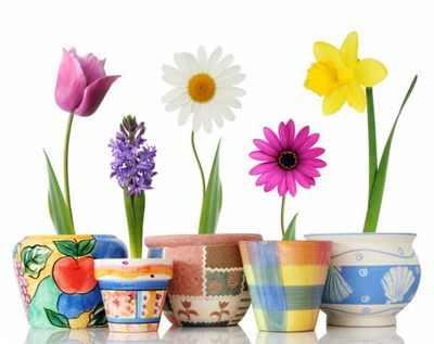 Картинки и названия цветов расцветающих первыми весной