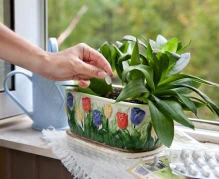 Как в домашних условиях подкормить комнатные цветы